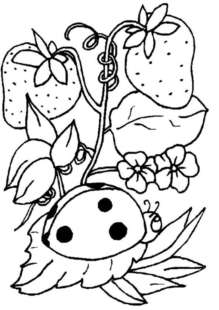 colorir desenho ladybug