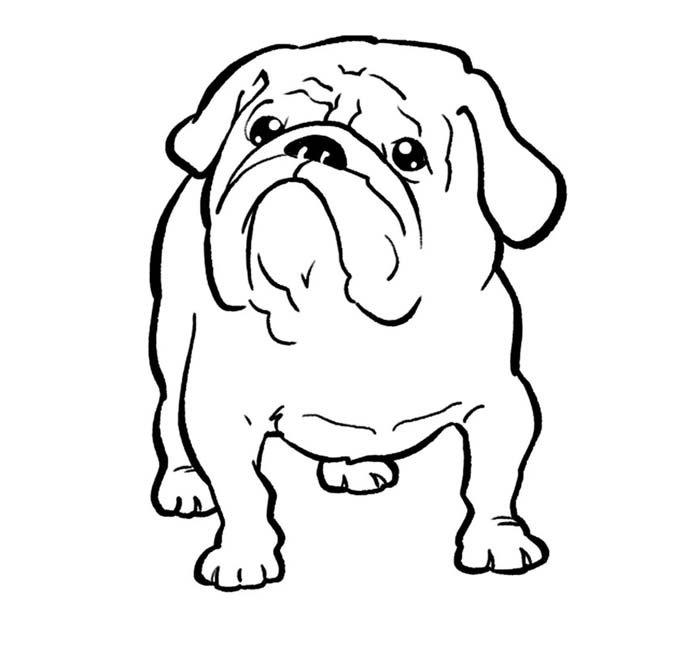 desenho de cachorro buldog