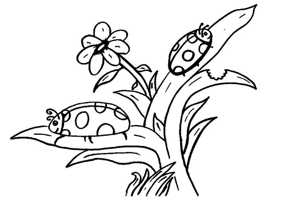 imprimir desenho ladybug colorir