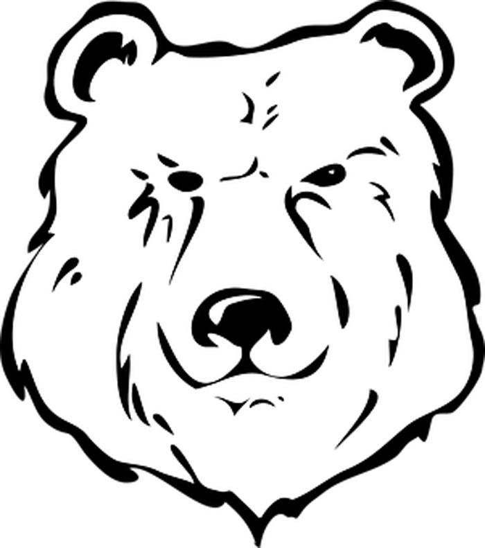 rosto urso bravo