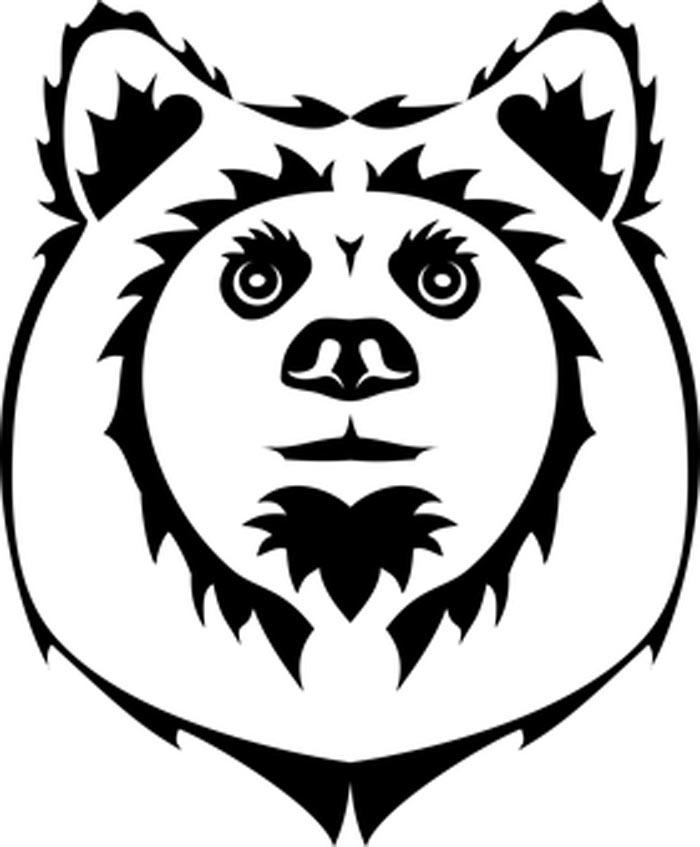 rosto urso coala