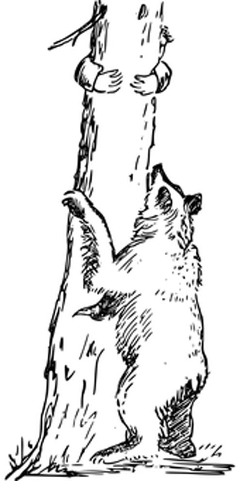 urso perseguindo homem