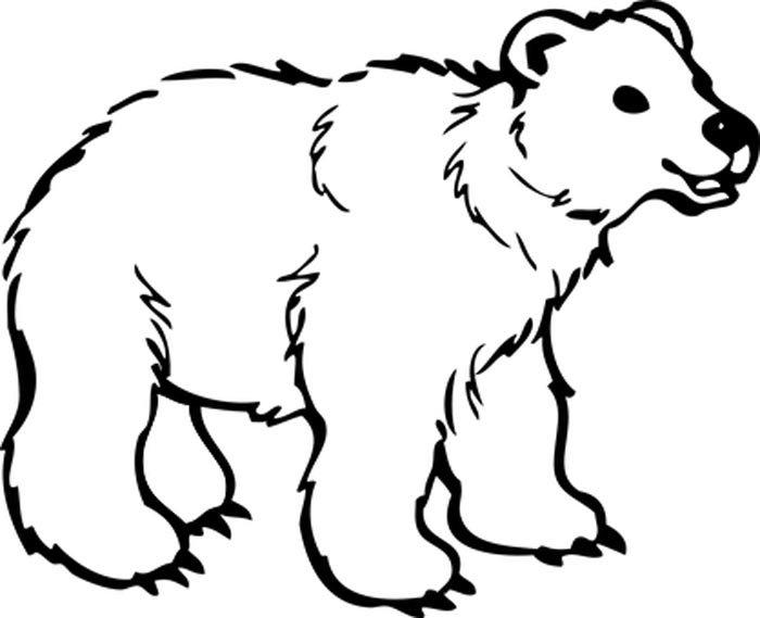 urso polar para colorir