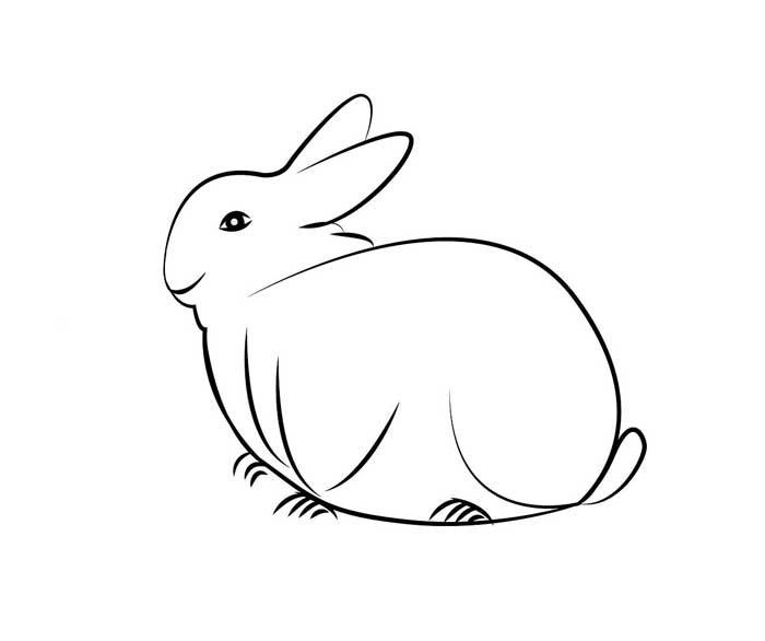 coelho colorir