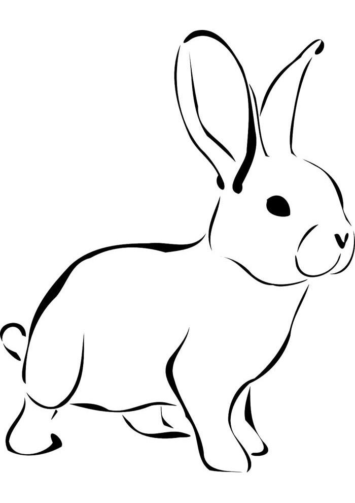 coelho para colorir 11