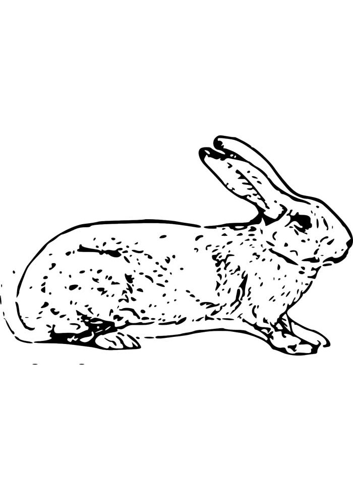 coelho para colorir 12