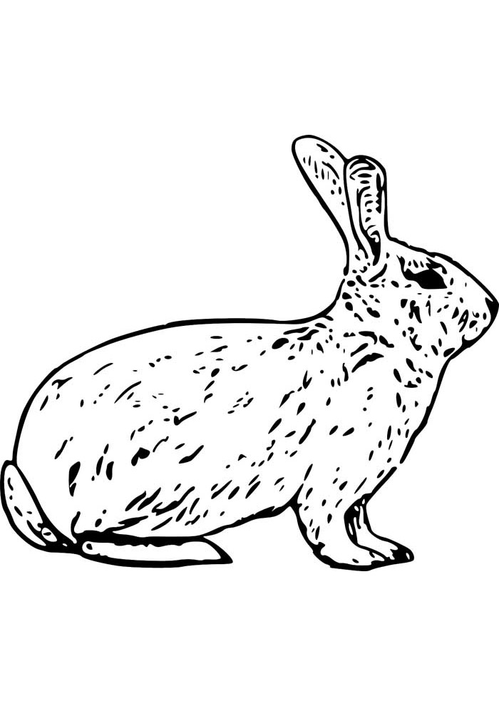 coelho para colorir 16