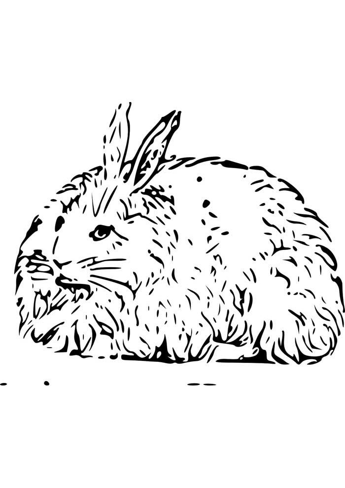 coelho para colorir 20