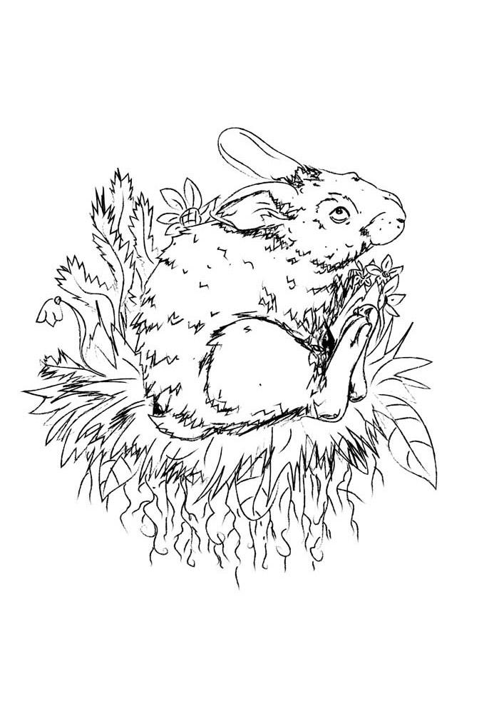 coelho para colorir 41