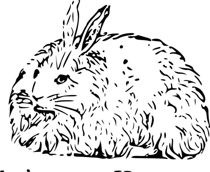 coelho peludo para colorir