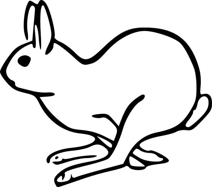 desenho coelho para colorir