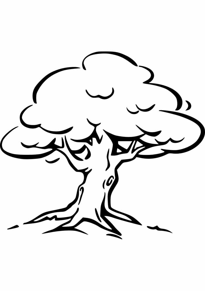 árvore para colorir com raizes