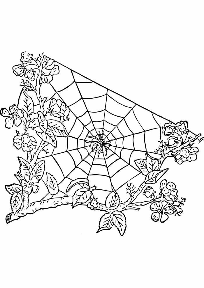 árvore para colorir com teia de aranha