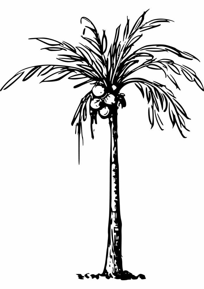 árvore para colorir coqueiro