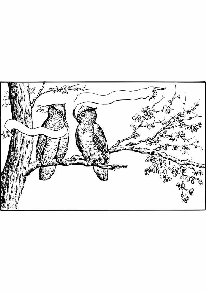 árvore para colorir corujas