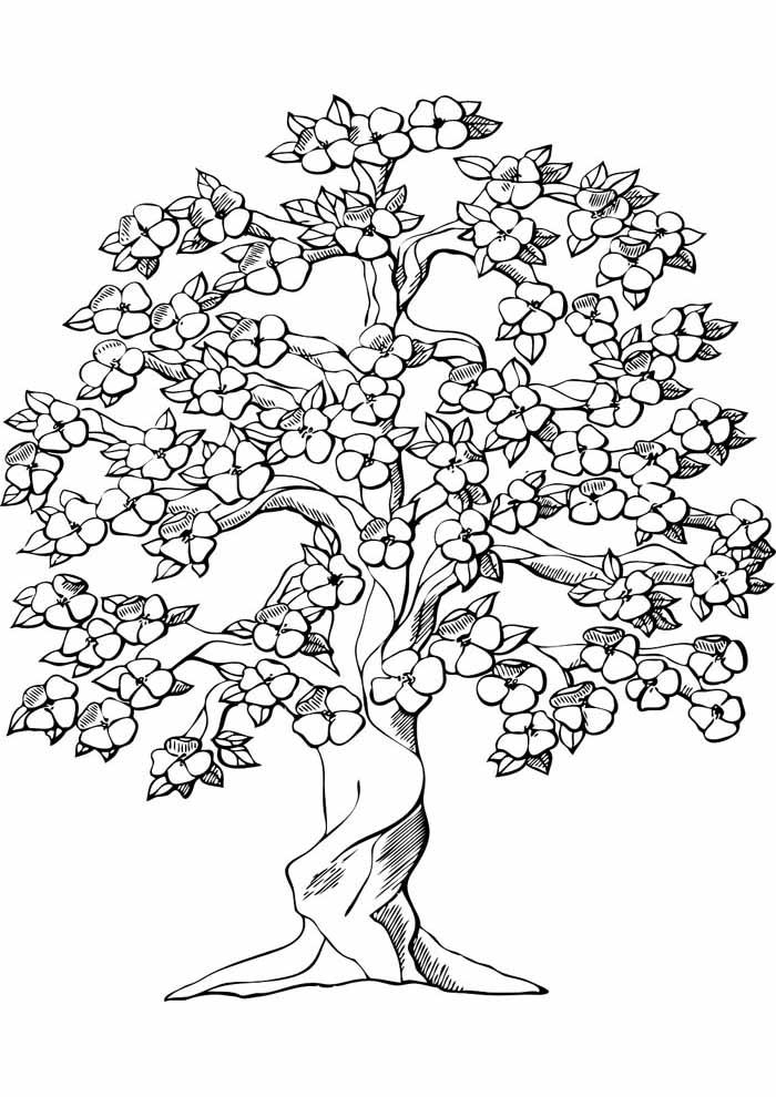 árvore para colorir florida
