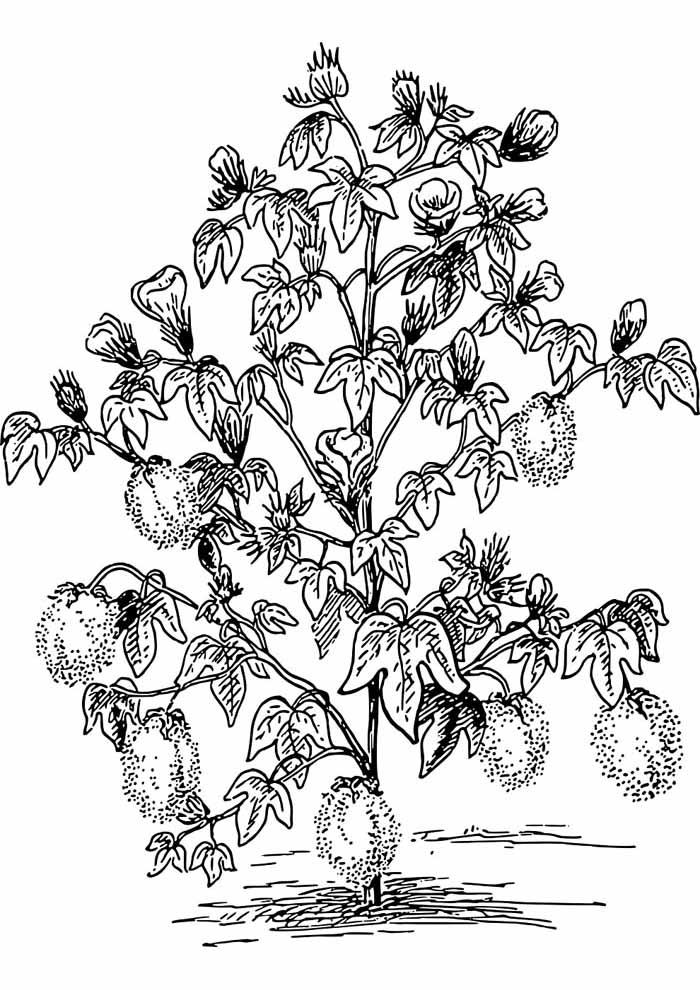 árvore para colorir folhas e flores