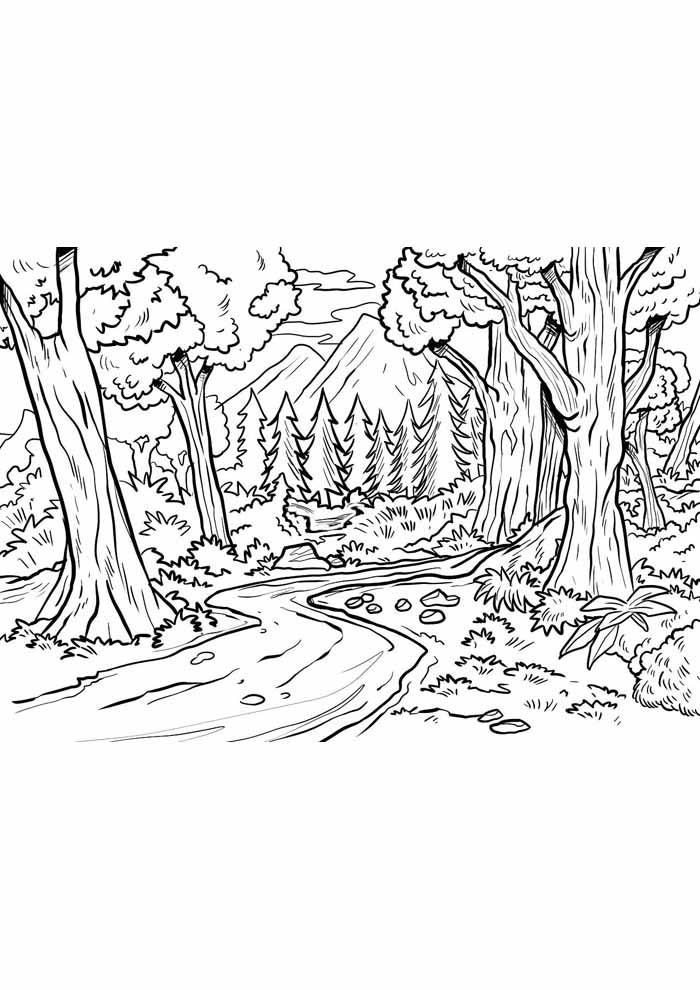 árvore para colorir pinheiros floresta