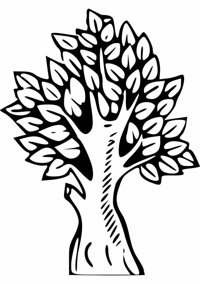 árvore para colorir tronco e folhas