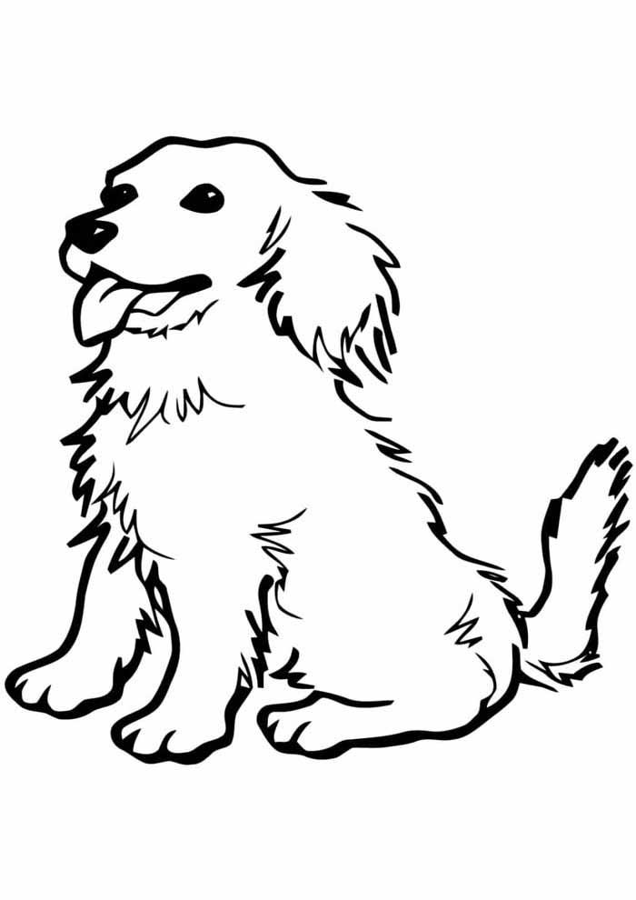 cachorro-para-colorir-com-o-pelo-despenteado