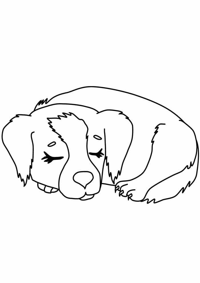 cachorro-para-colorir-dormindo