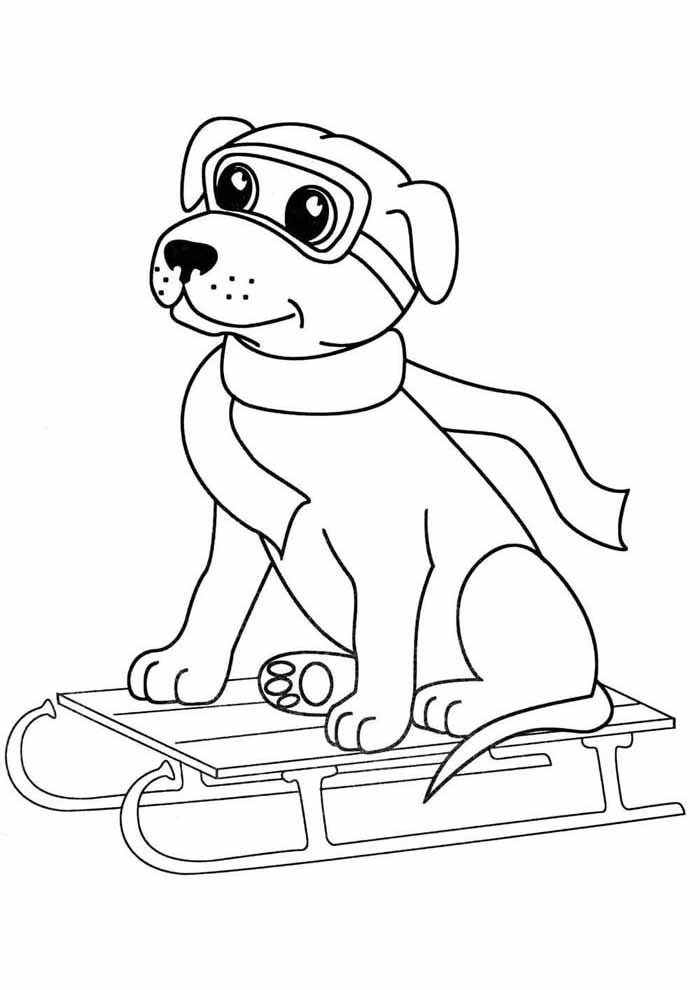 cachorro-para-colorir-esquiando