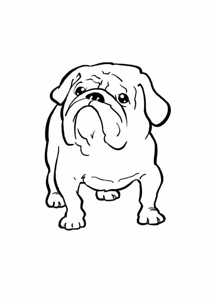 desenho-de-cachorro-para-colorir-buldog
