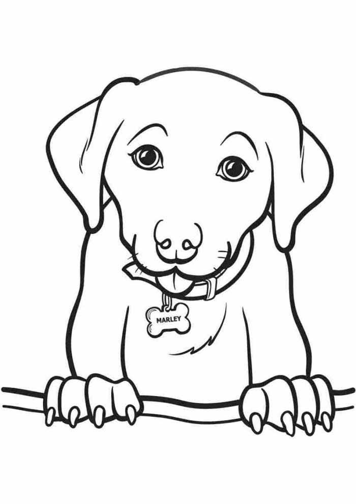 desenho-de-cachorro-para-colorir-com-as-patas-para-cima
