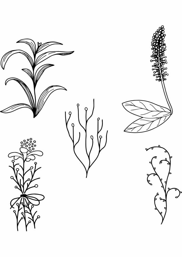 desenho-de-flores-plantas