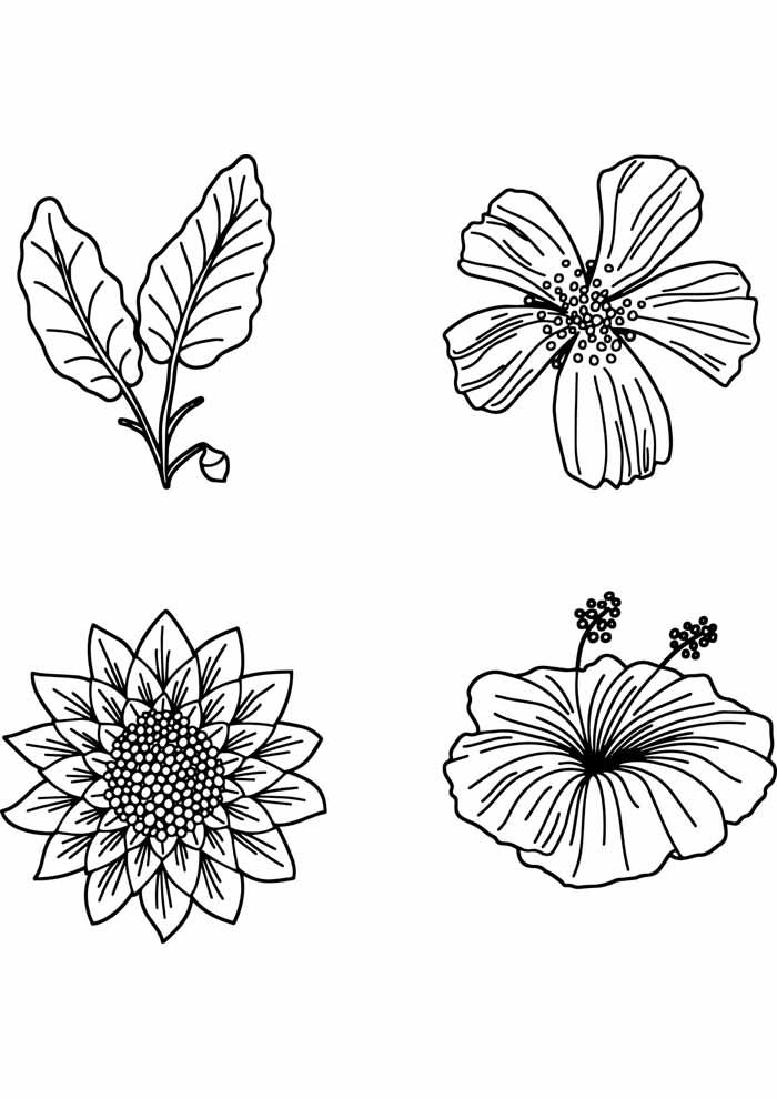 desenho-de-flores