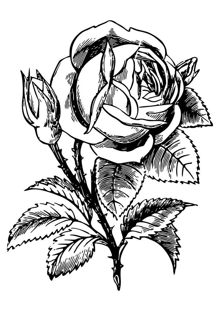 flor-grande-para-colorir