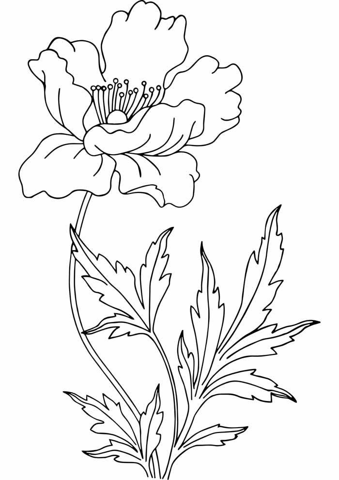 flor-para-colorir-com-folhas