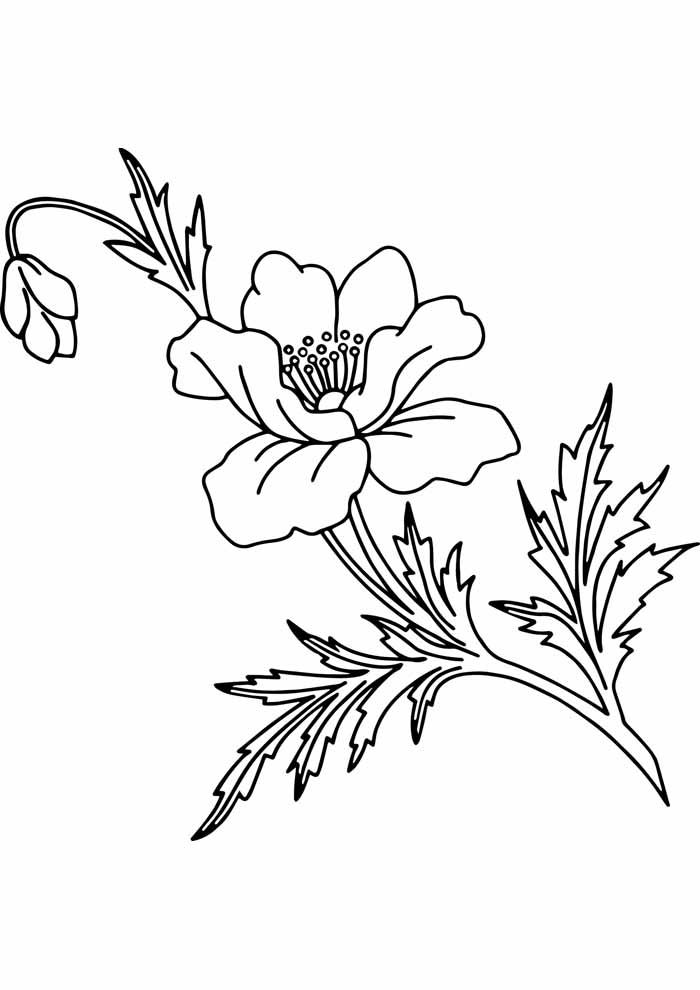 flores-para-colorir-aberta