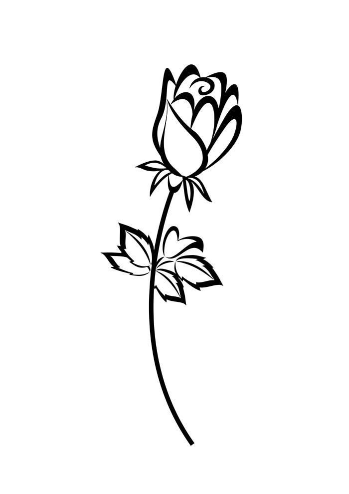 flores-para-colorir-botao-de-rosa