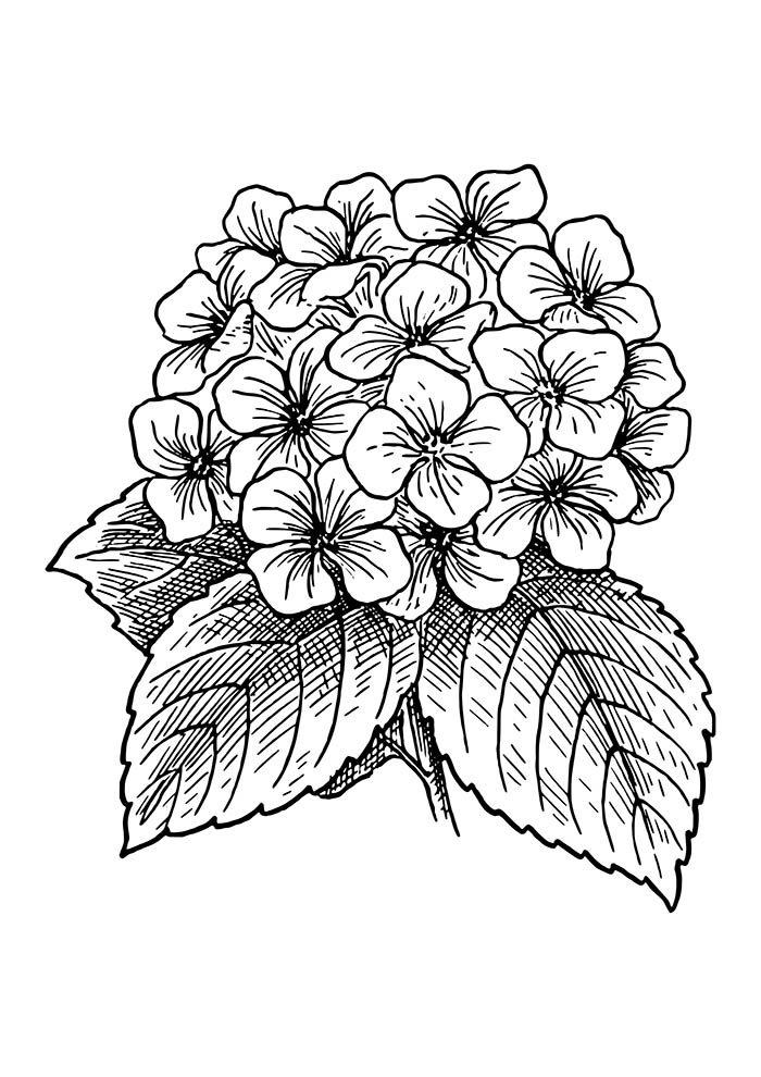 40 Desenhos De Flores Para Imprimir E Colorir Desenhos Para Colorir