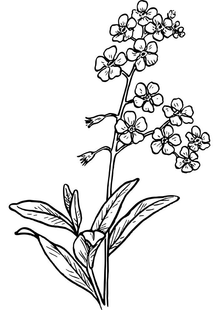 flores-para-colorir-e-folhas