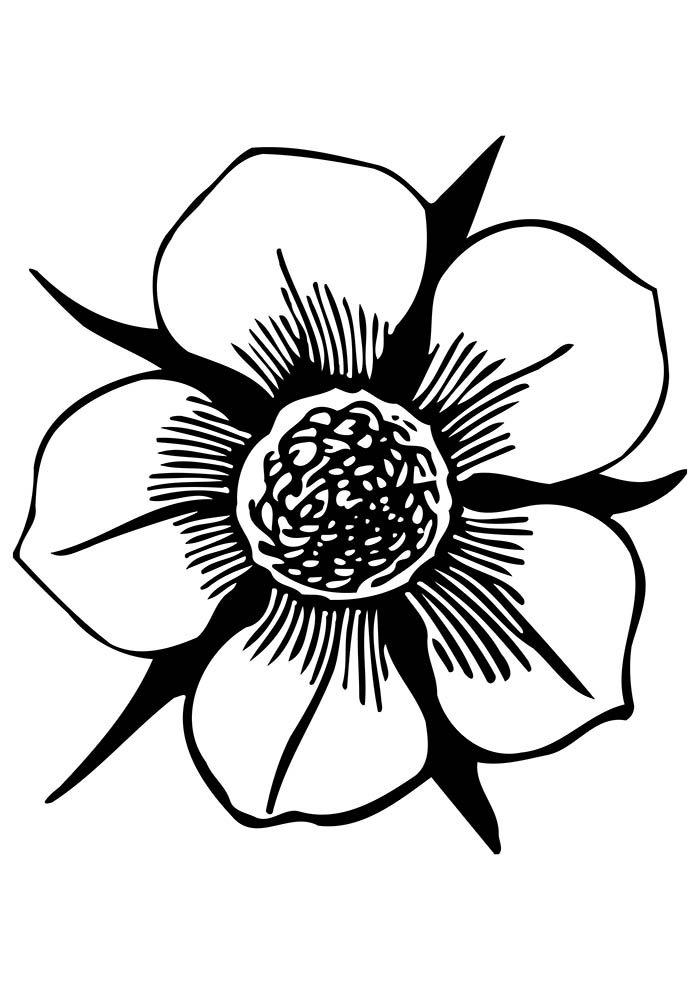 flores-para-colorir-grandes-petalas