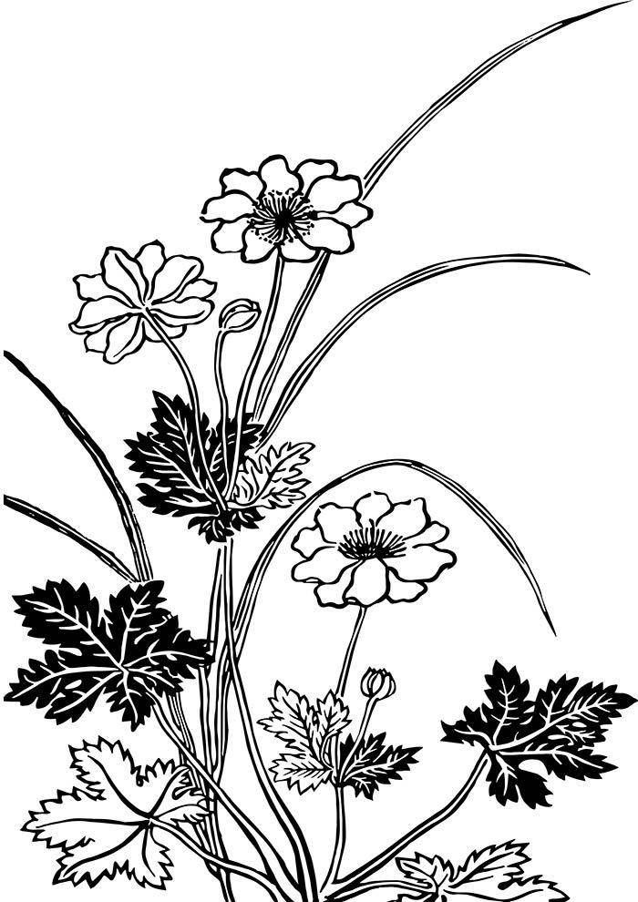flores-para-colorir-jardim-vintage