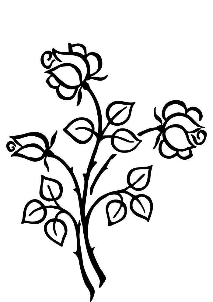 flores-para-colorir-rosas-estilizadas