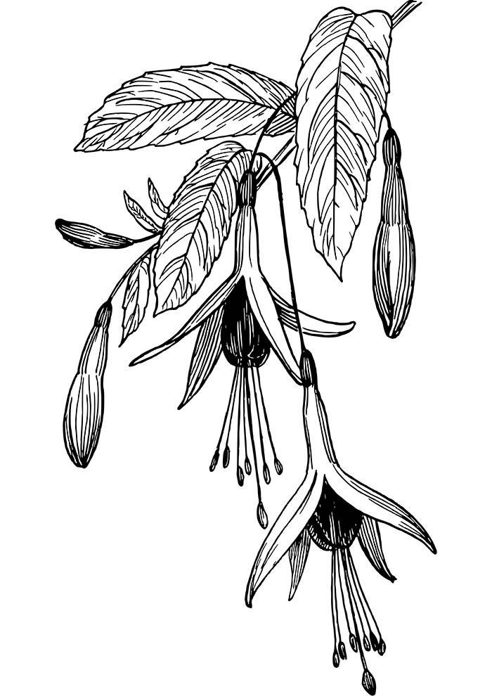 flores-suspensas-para-colorir