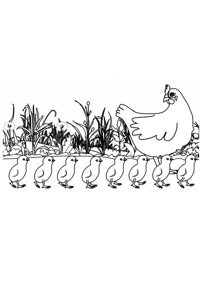 galinha para colorir 17