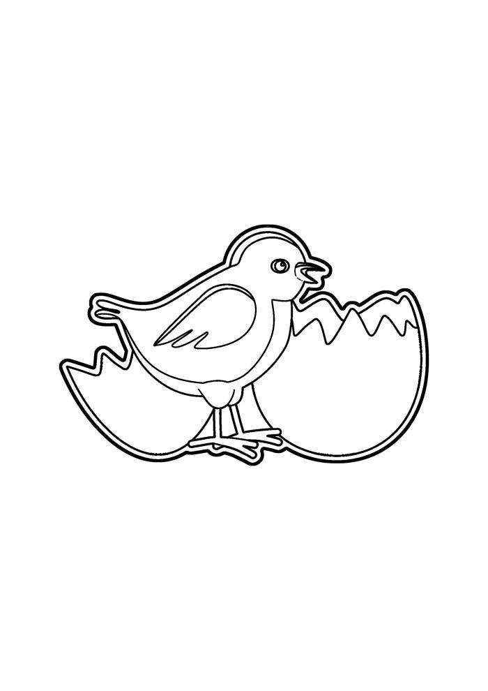 galinha para colorir 18