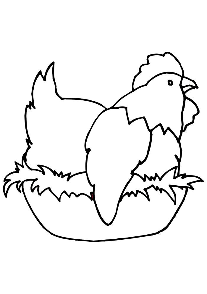 galinha para colorir 7