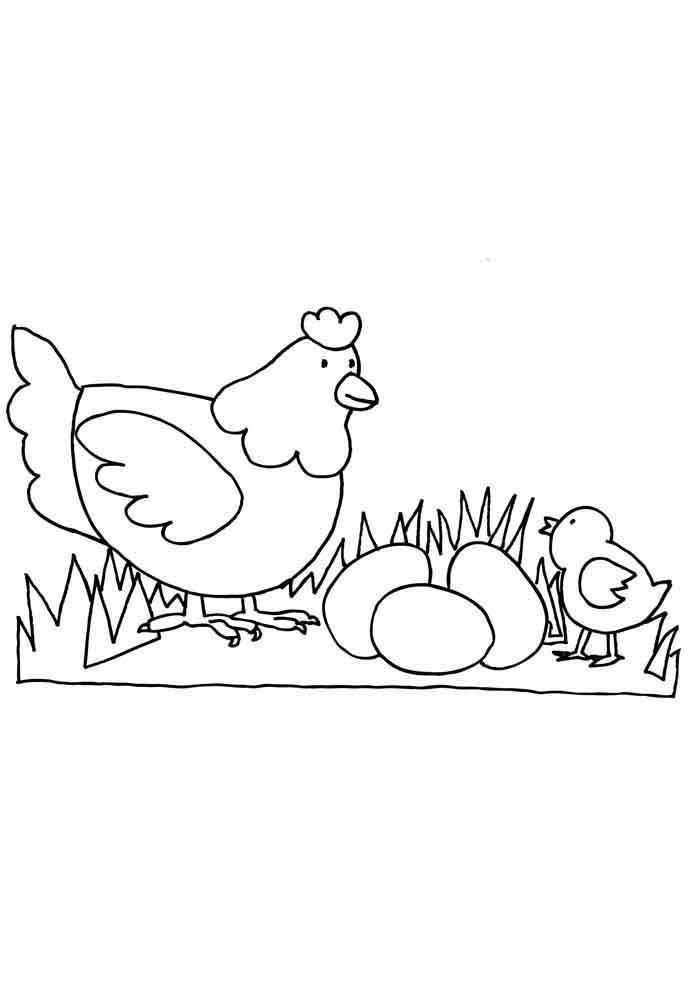 galinha para colorir com ovos e pintinho infantil