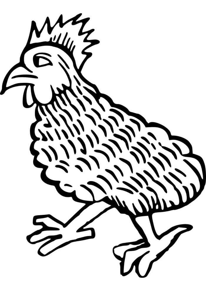 galinha para colorir galo