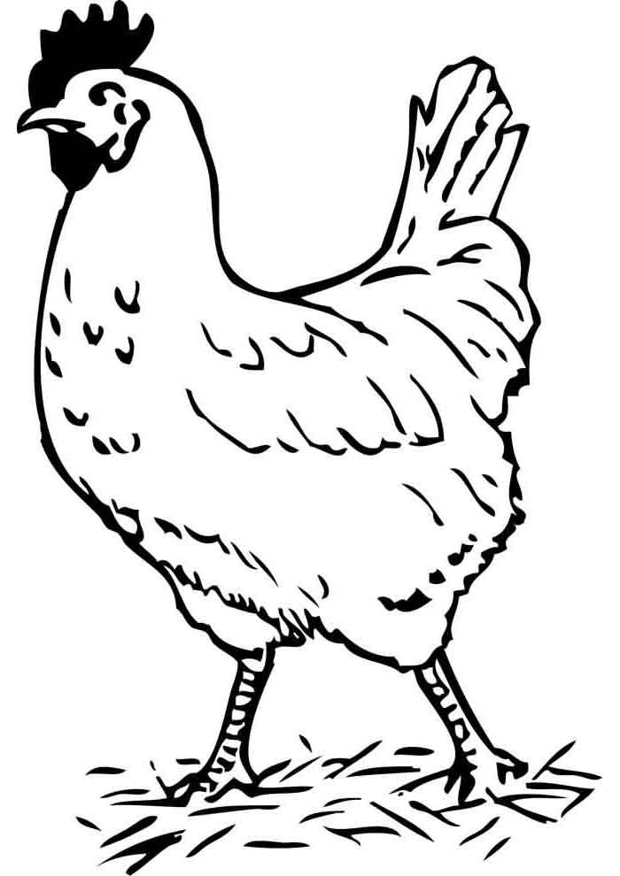 galinha para colorir granja