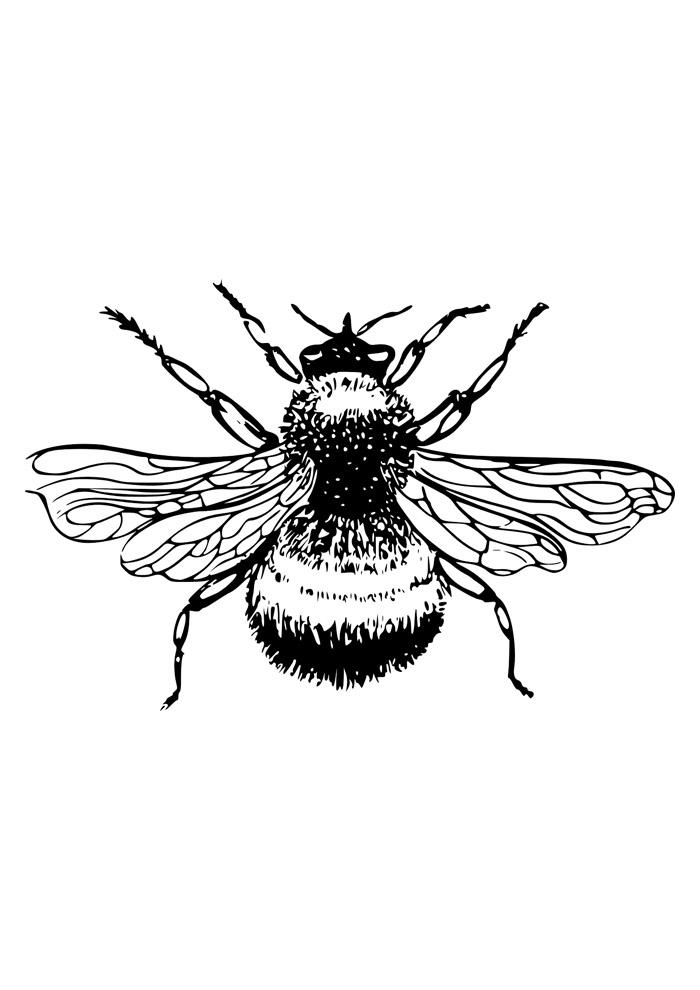 abelha para colorir 27