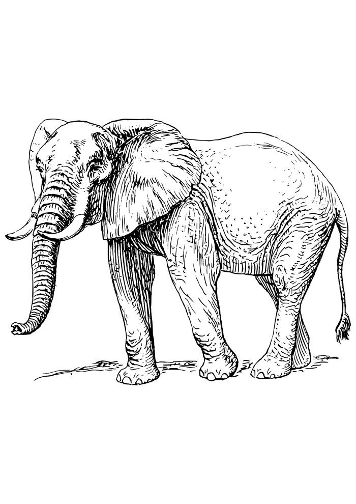 elefante para colorir 11