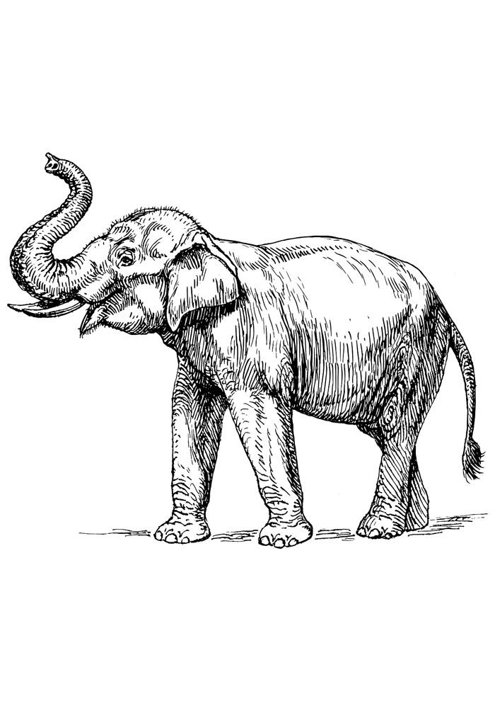 elefante para colorir 14