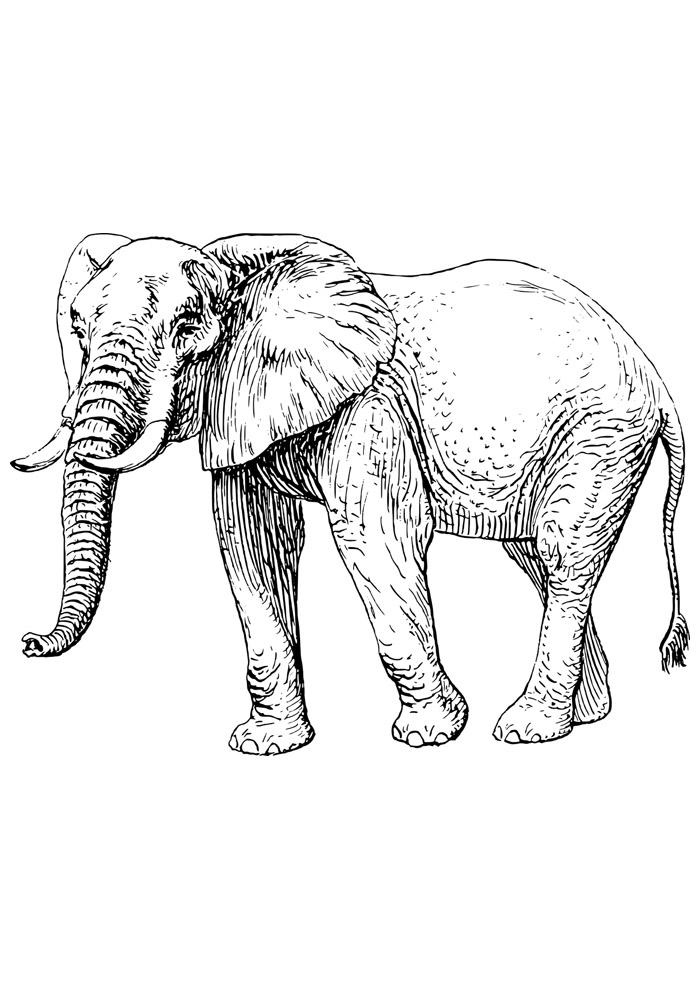 elefante para colorir 4